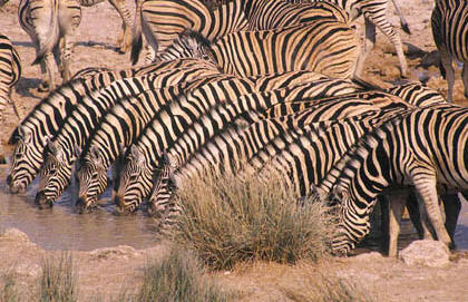 Namibia Vacations