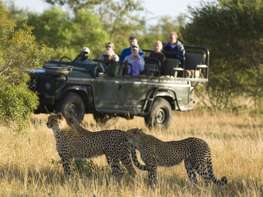 Located on the boundary of the world renowned Kruger National Park Ngala Private Game Reserve is well known for its high densities of elephant ... & Ngala Tented Camp